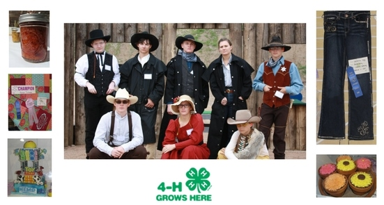 Larimer County 4-H projects