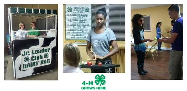larimer county 4-H junior leadership club