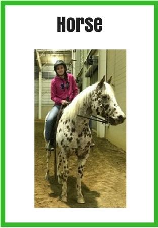 Larimer County 4-H Horse and rider